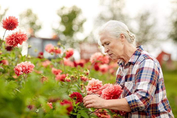 personne âgée jardinage
