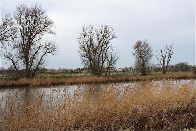 beccles-marsh.jpg