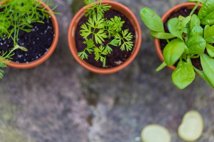 pot de légumes plants.jpg