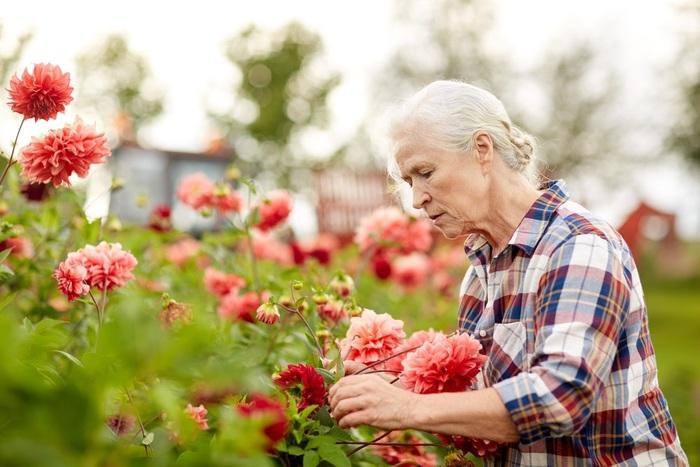 personne âgée-jardinage.jpg