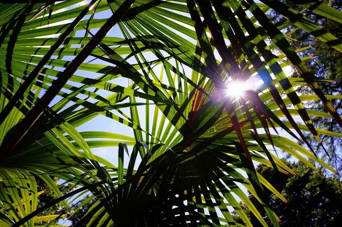 Planter des feuilles au soleil