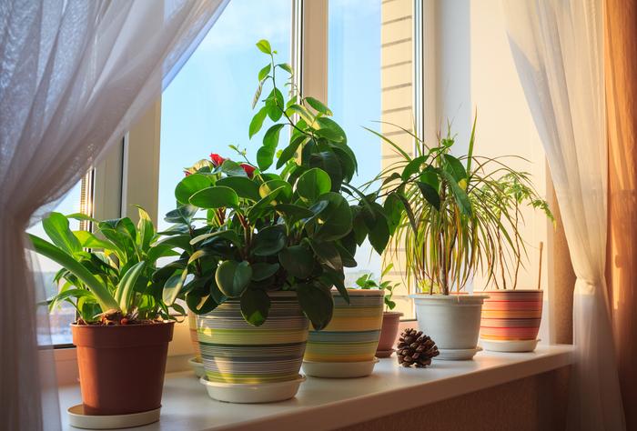 plantes d'intérieur sur un rebord de fenêtre