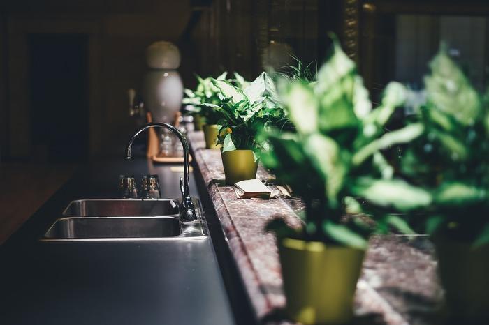 Cultivez des plantes et des légumes pendant l'hiver