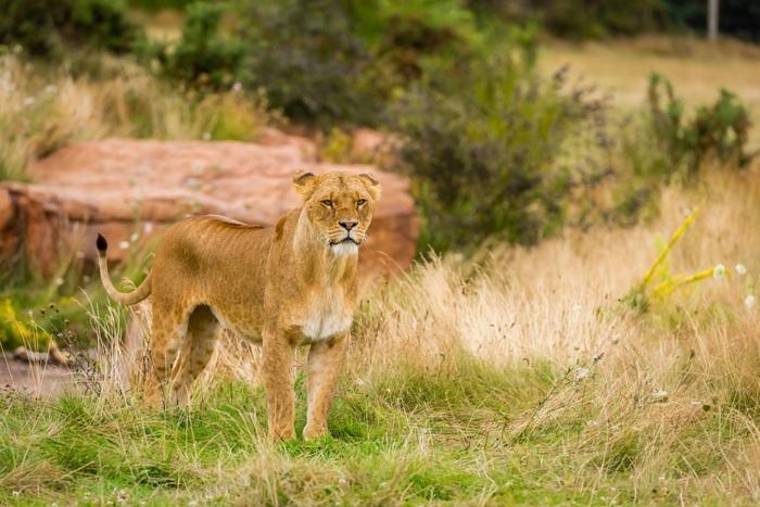 west-midland-safari-park.jpg