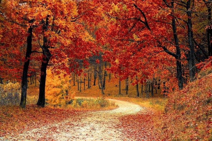 Scène de promenade d'automne